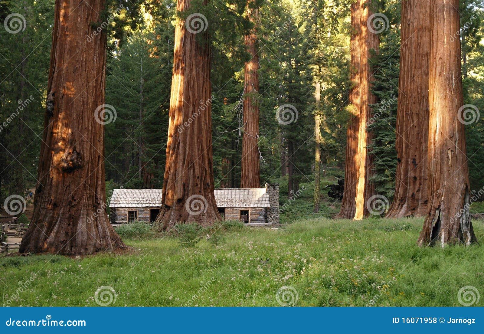 Redwoods In Yosemite Cabin Map on