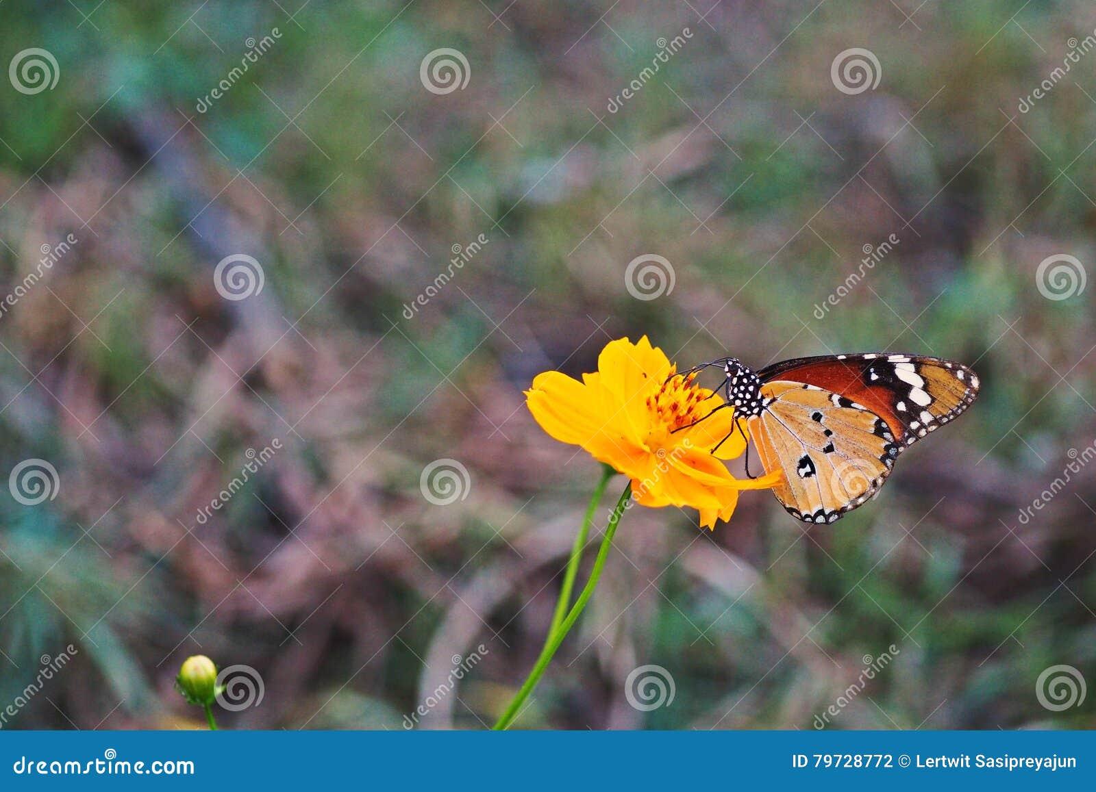 Mariposa, insectos hermosos y coloridos