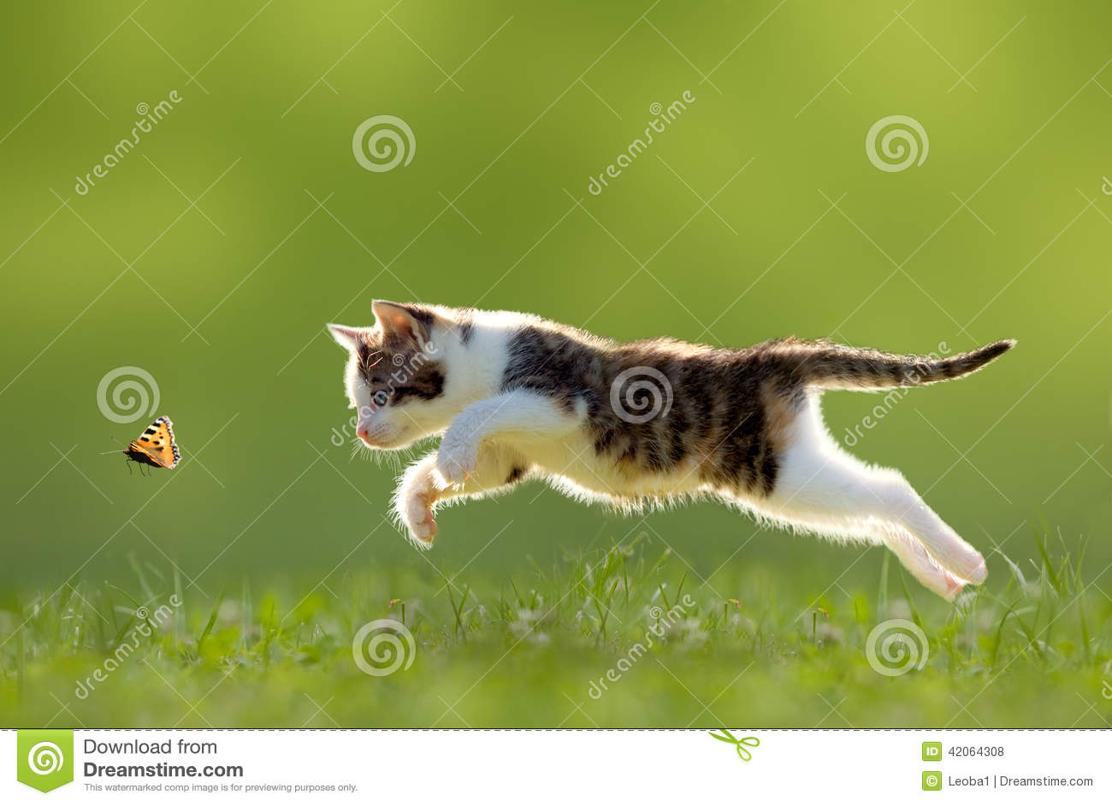 Mariposa joven de la caza del gato