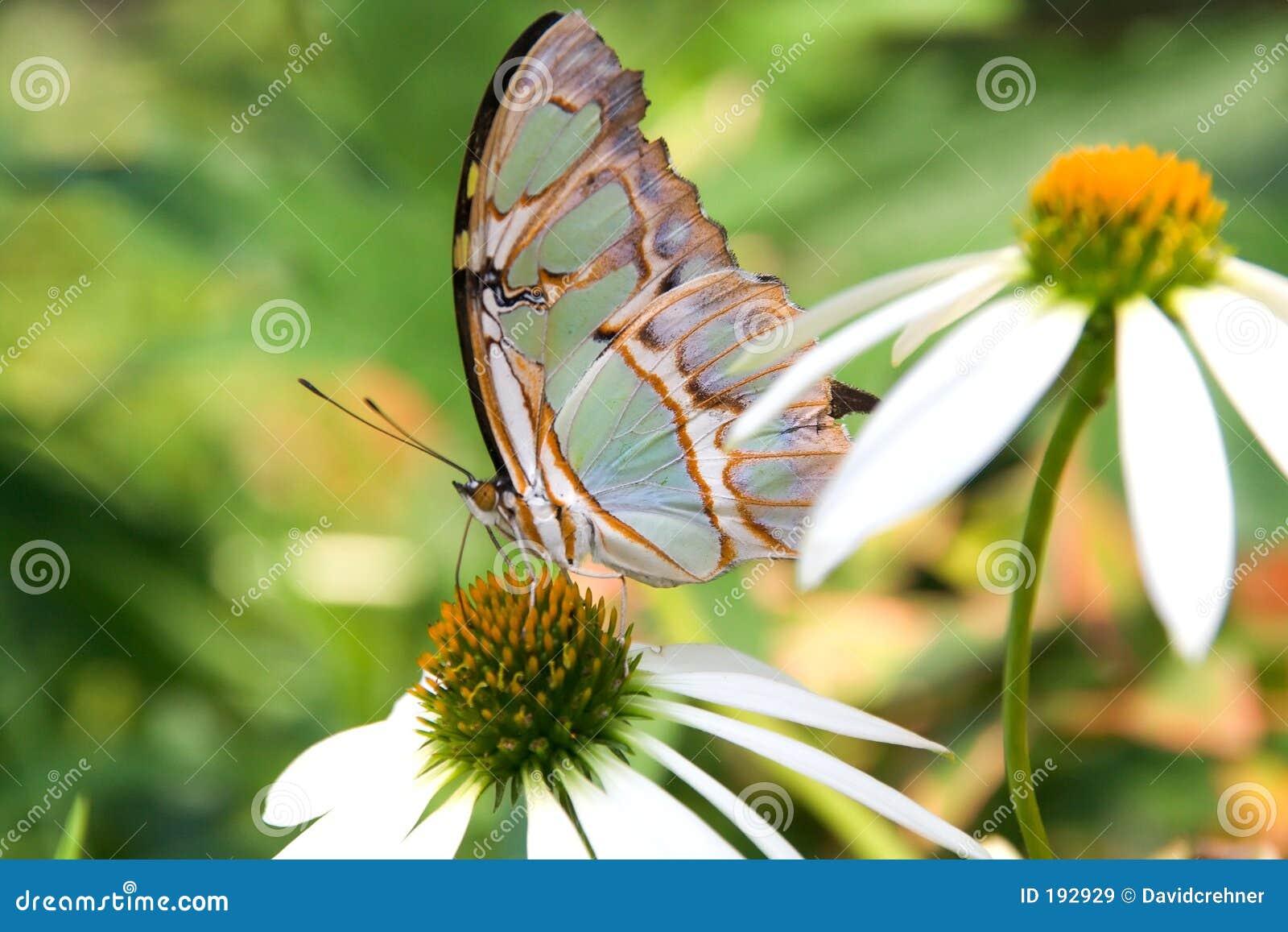 Mariposa multicolora