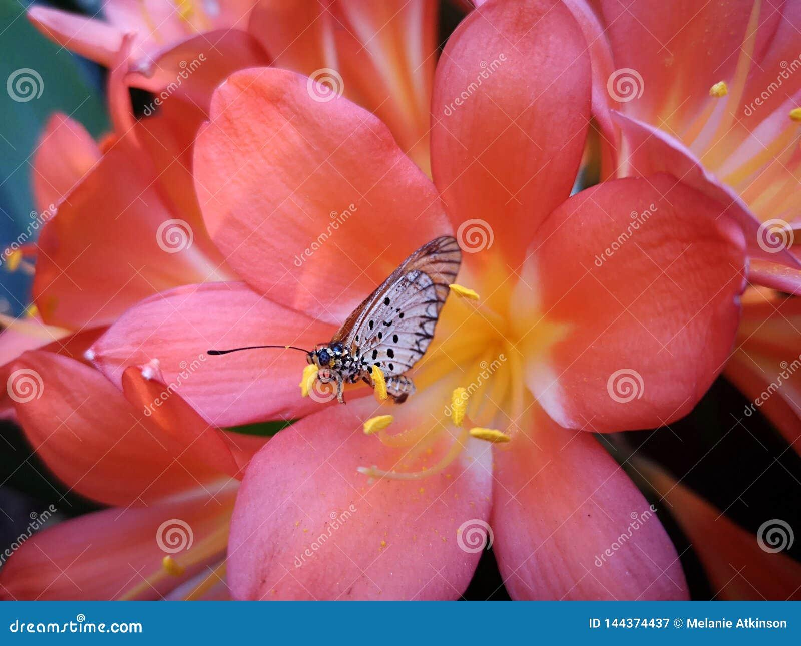 Mariposa que se sienta en el pétalo de una flor rosada