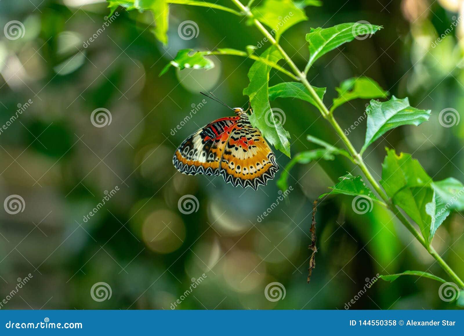 Mariposa que se sienta en una rama frondosa