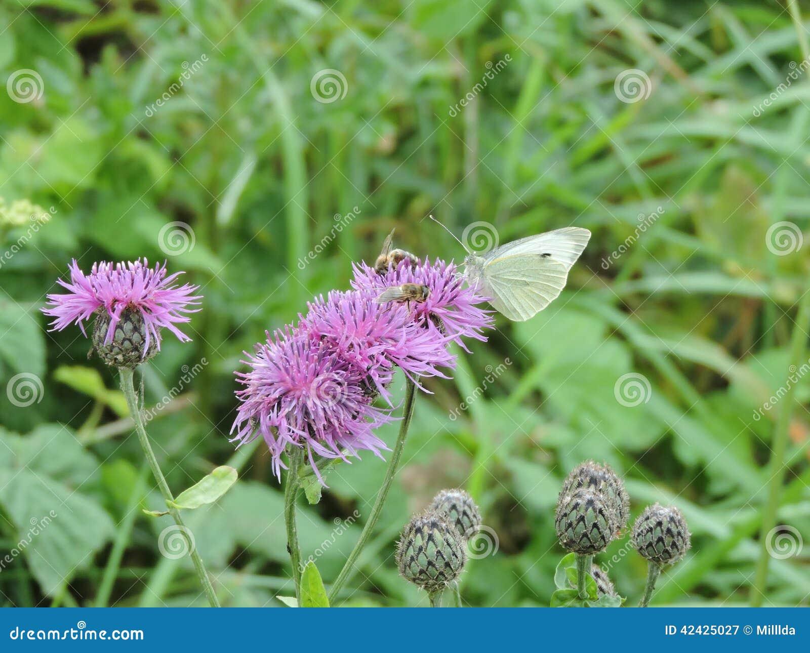 Mariposa y abeja en la flor