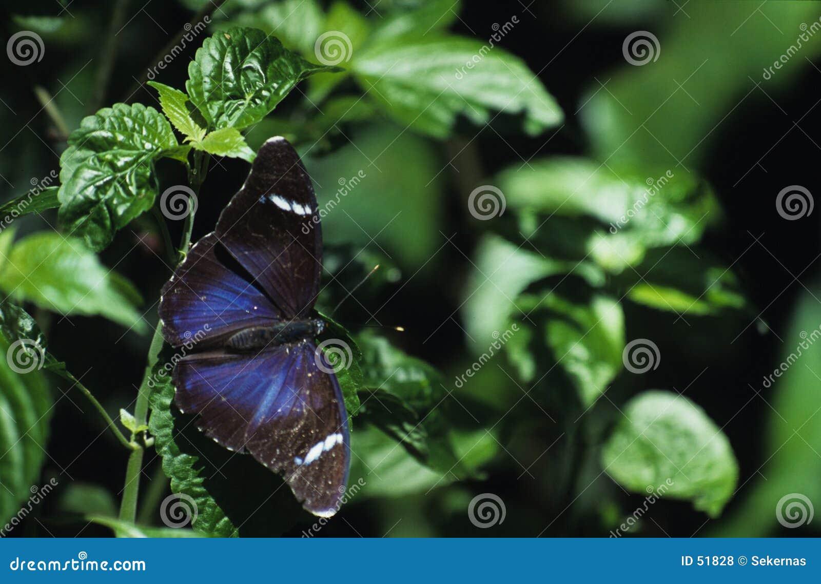 Mariposa y hojas