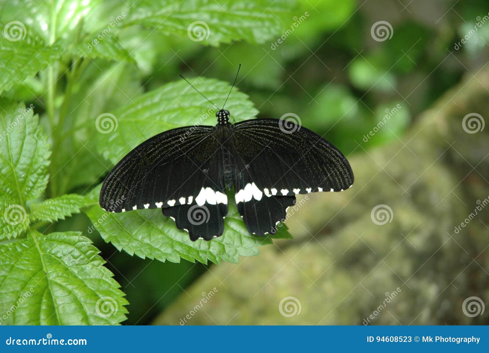 Mariposas Bonitas Imagen De Archivo Imagen De Insectos 94608523