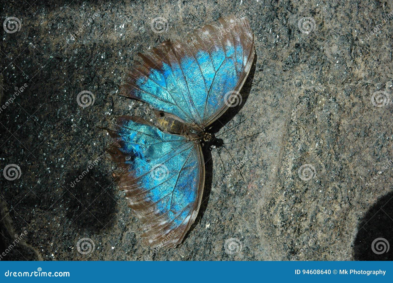 Mariposas Bonitas Foto De Archivo Imagen De Fotografía 94608640