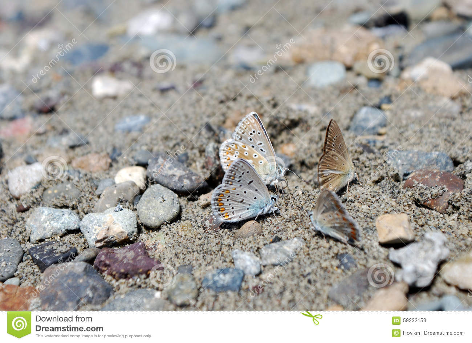 Download Mariposas De Foure En La Arena Imagen de archivo - Imagen de d0, camino: 59232153