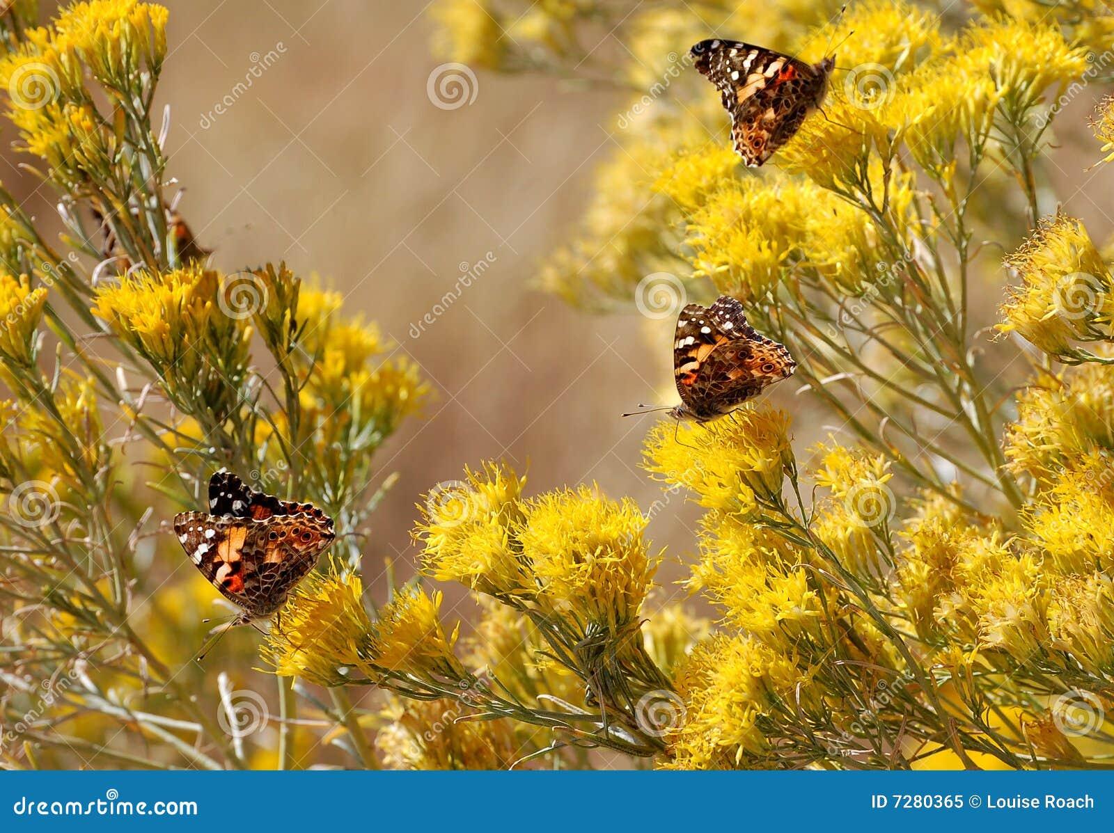Mariposas en Chamisa