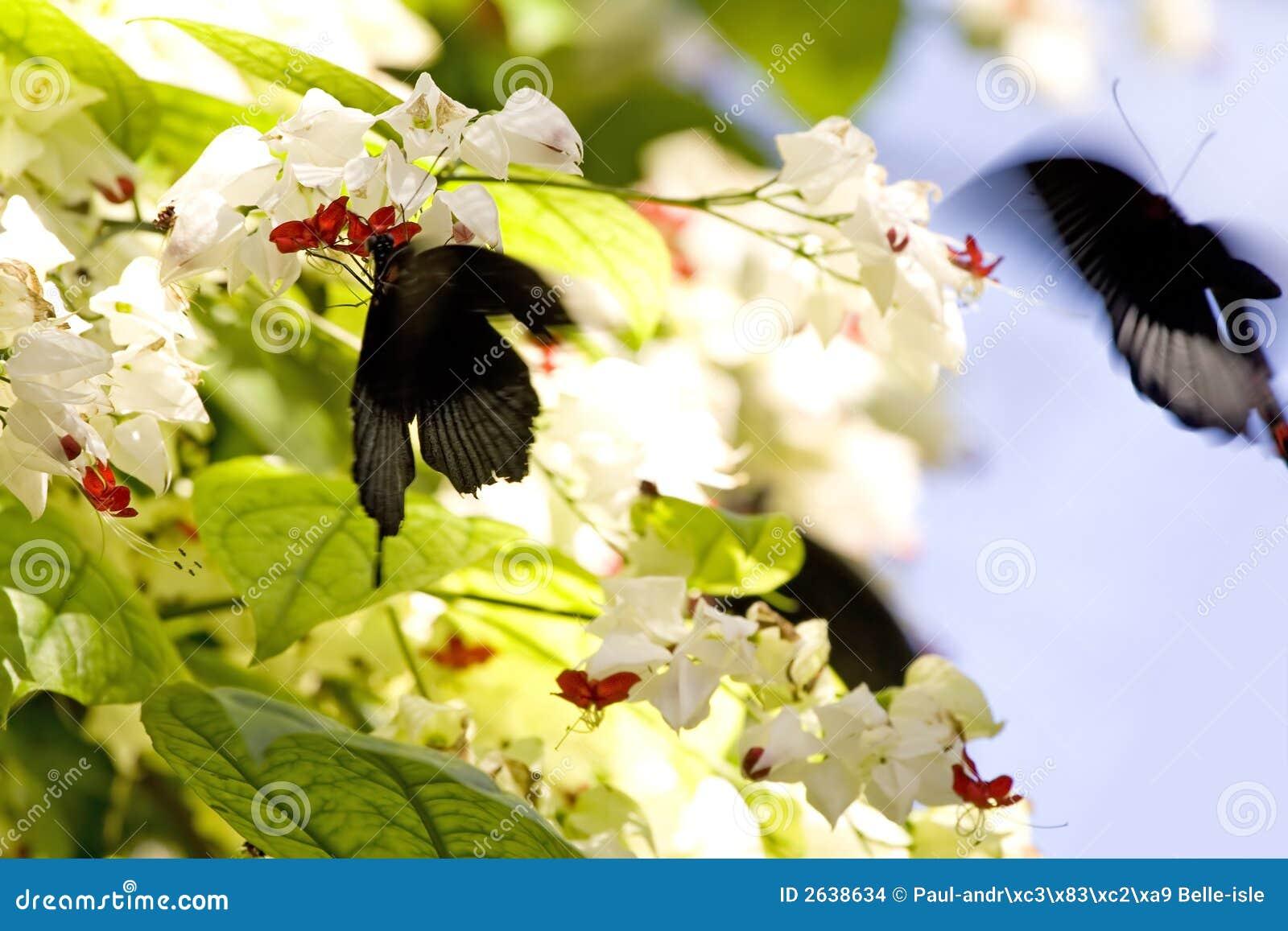 Mariposas en la acción