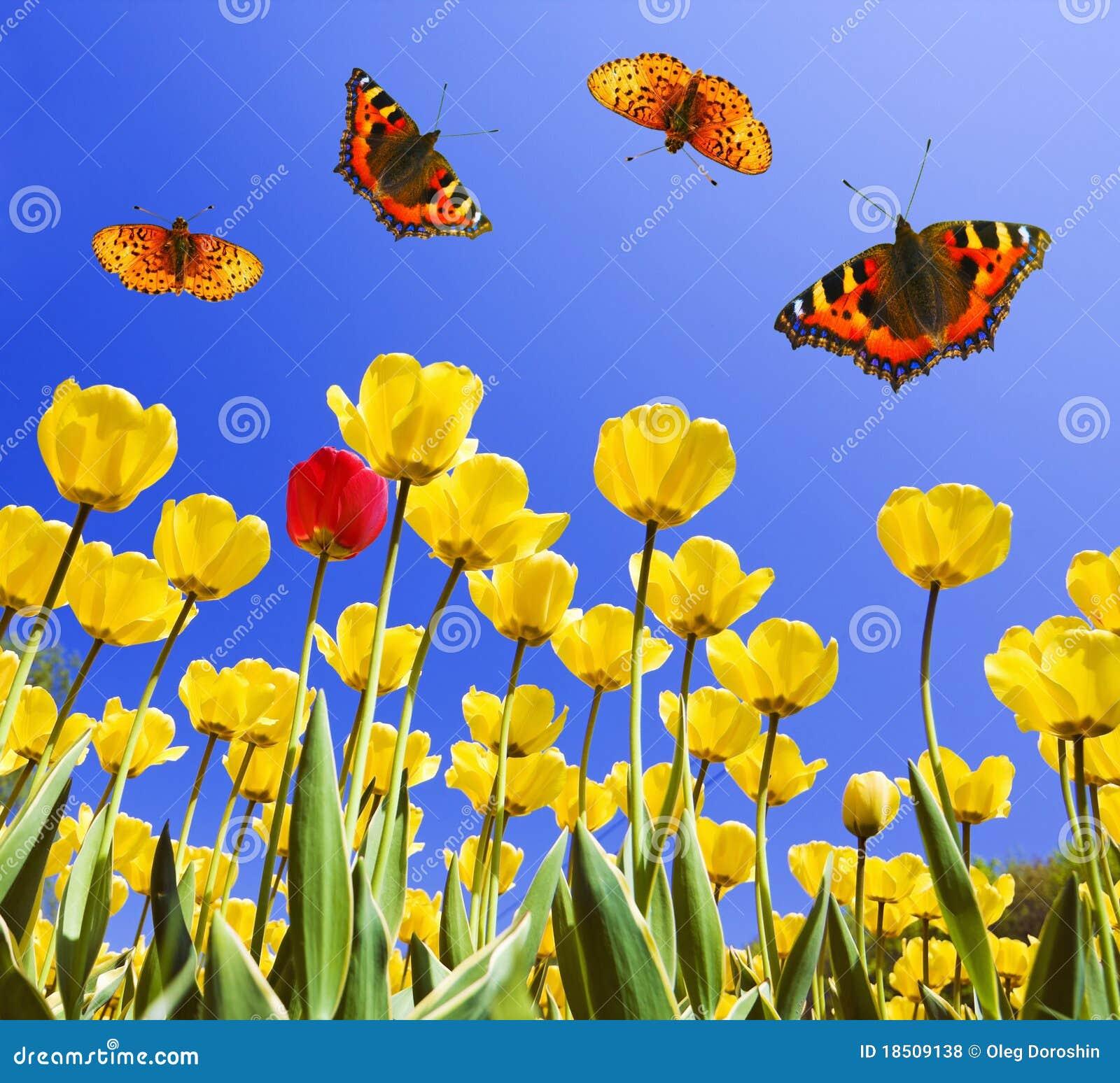 mariposas en tulipanes amarillos fotos de archivo libres de regal as imagen 18509138. Black Bedroom Furniture Sets. Home Design Ideas