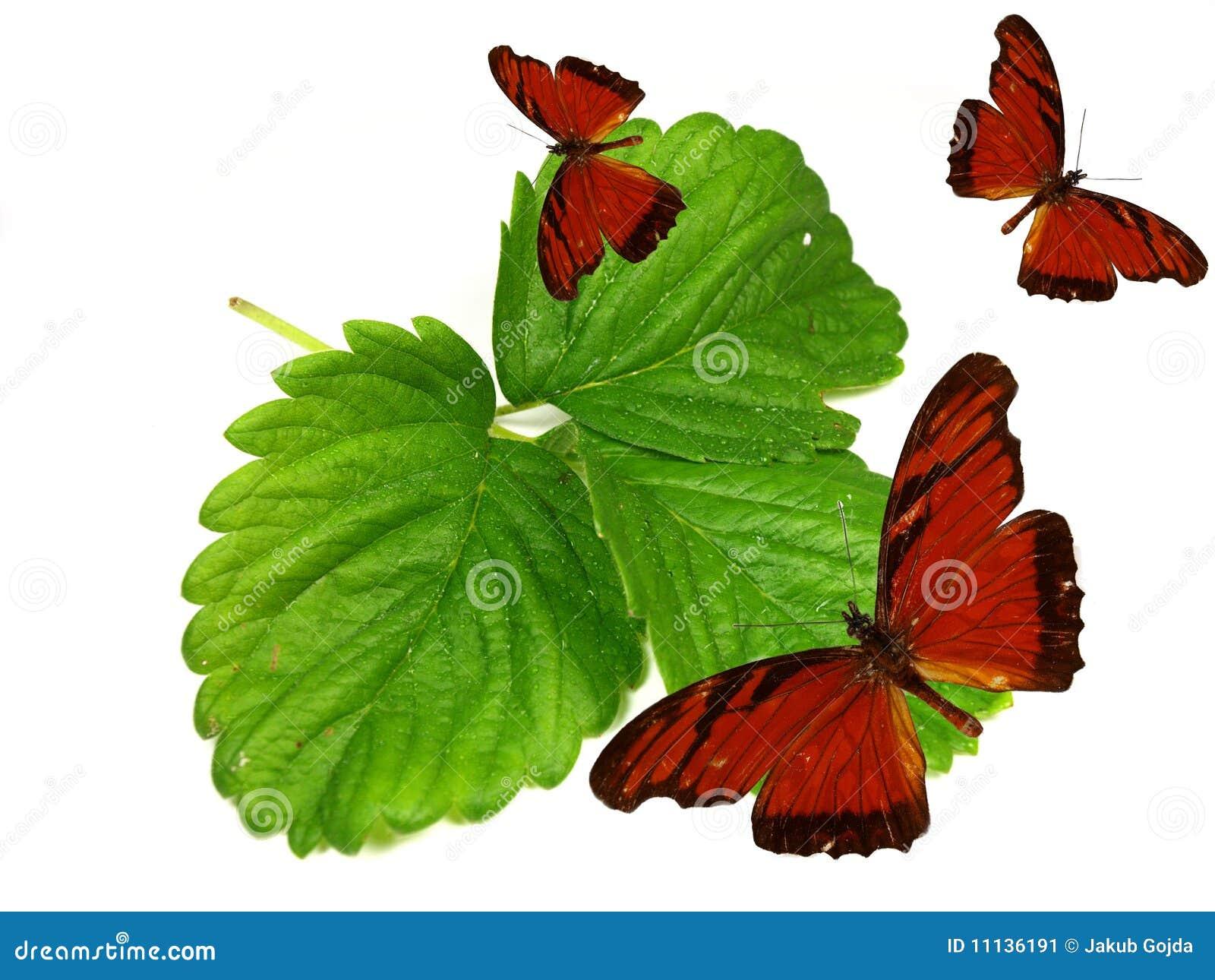 Mariposas exóticas en las hojas verdes frescas
