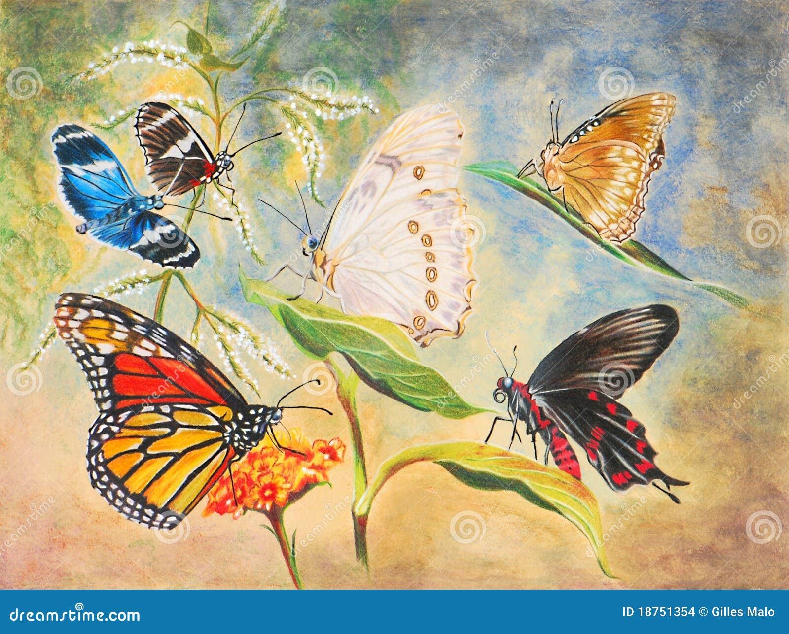 Mariposas Hermosas Stock De Ilustración Ilustración De Primers