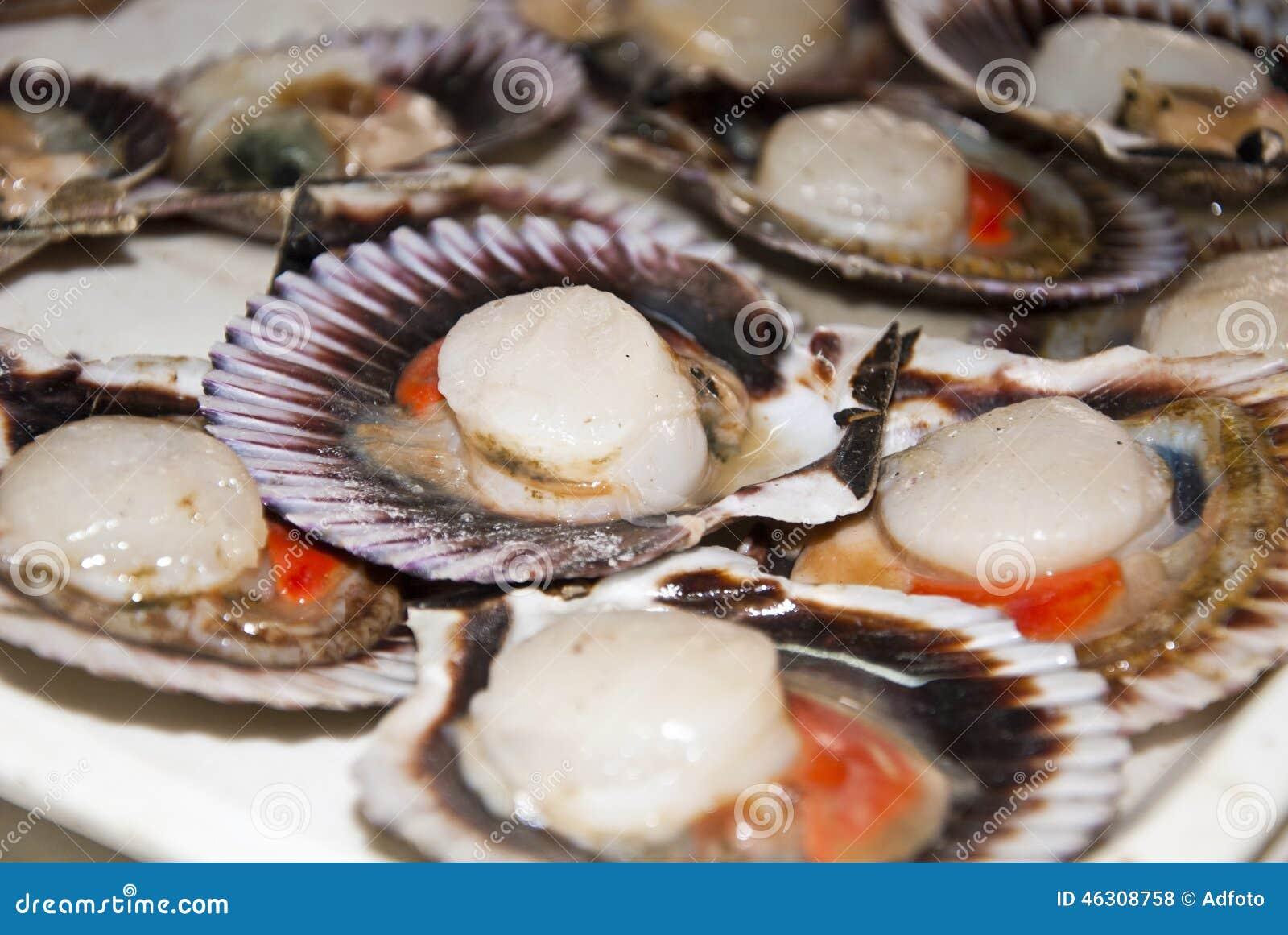 mariscos conchas de peregrino foto de archivo imagen