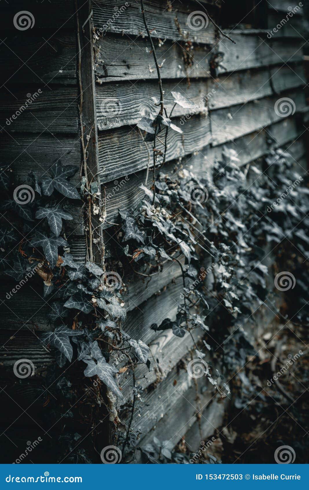 Markotna i straszna stara drewniana jata