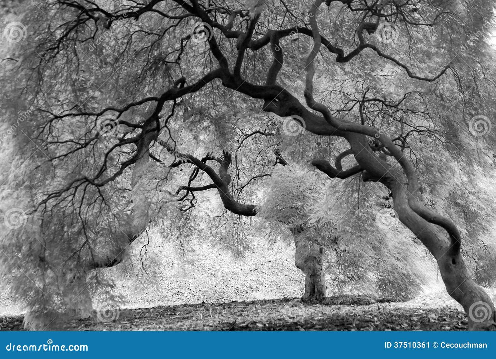 Markotni drzewa w Czarny I Biały