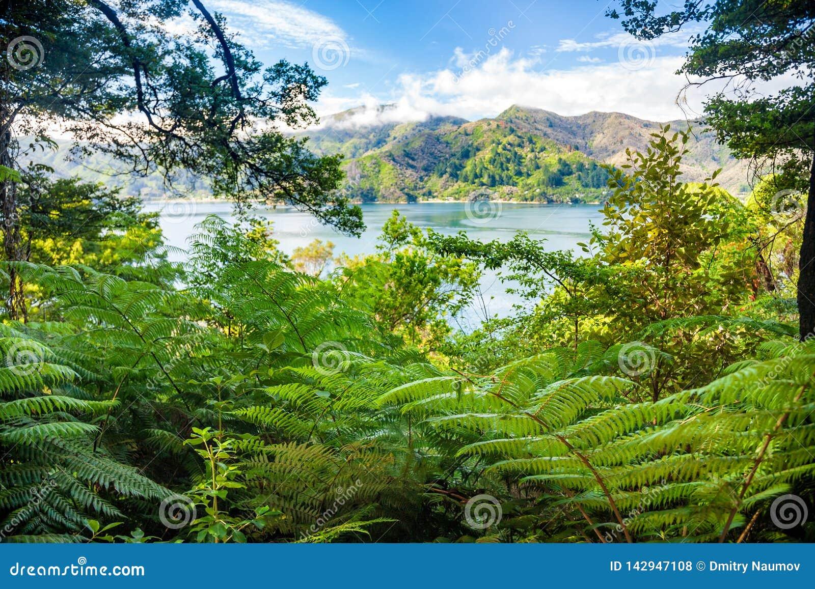 Marlboroughgeluiden zoals die van Koningin Charlotte Track South Island New Zeeland worden bekeken