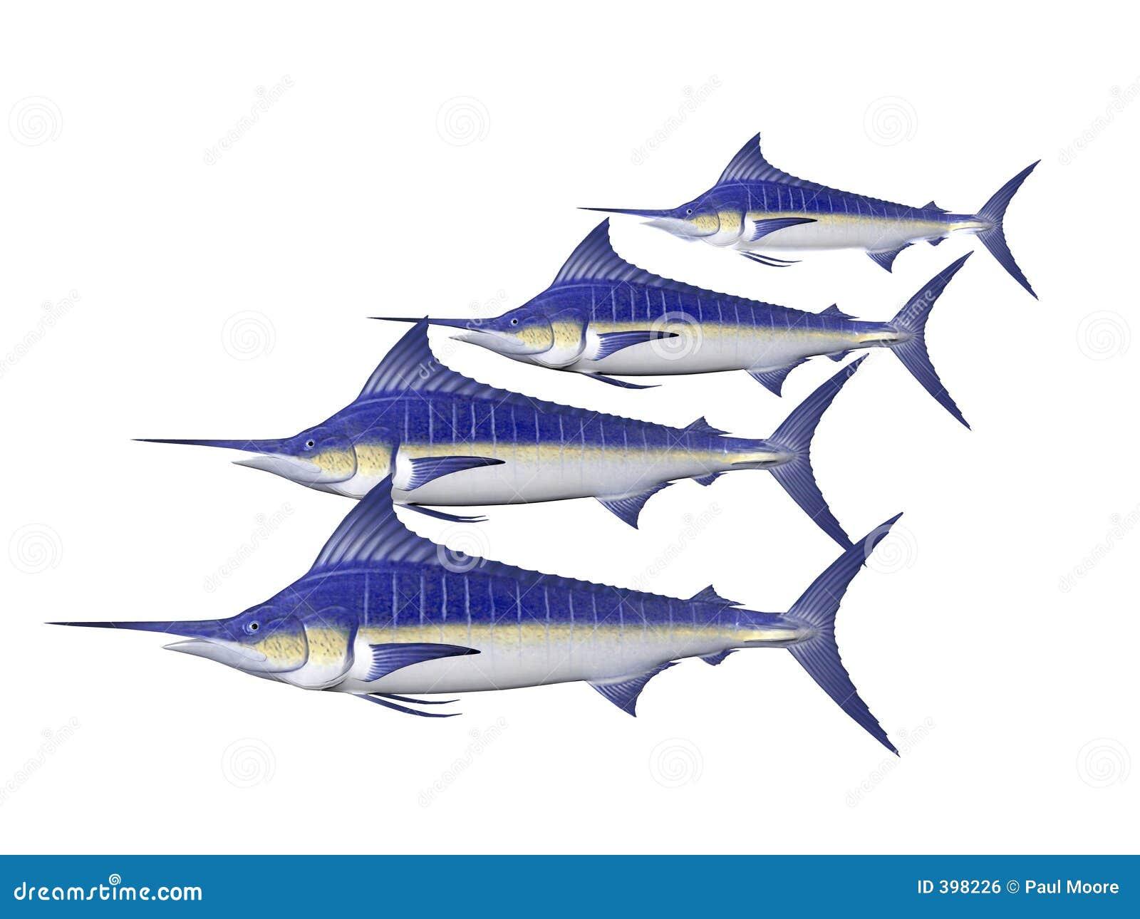 Marlin τέσσερα