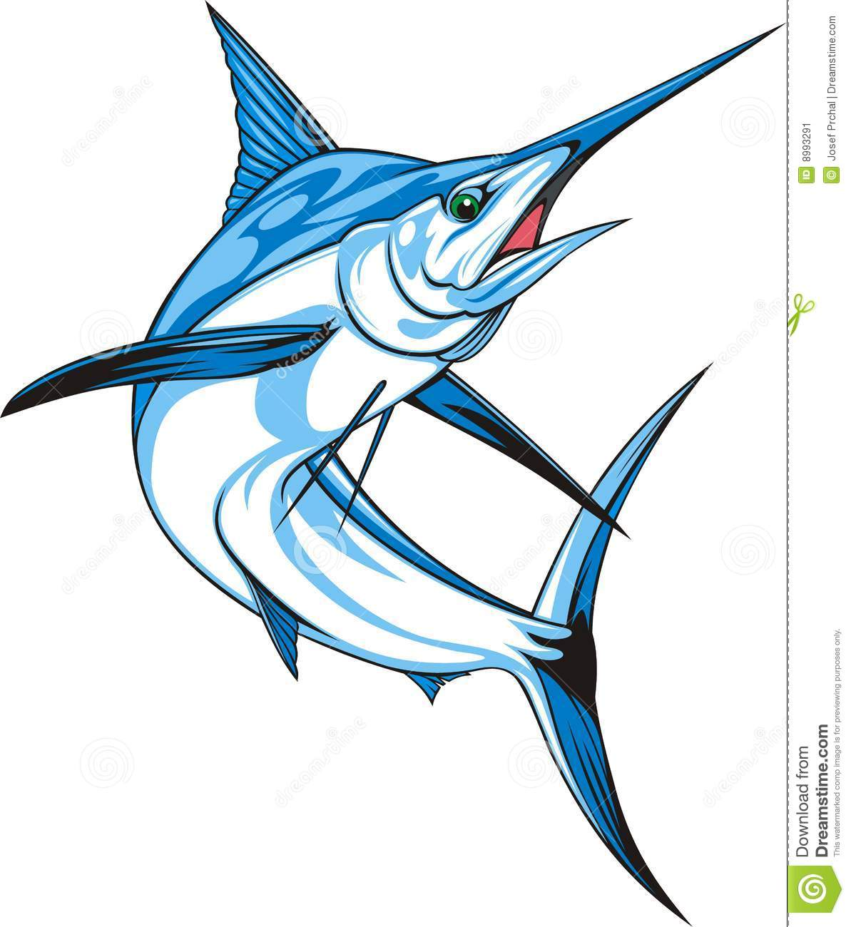 Natural blue marlin on the white background.
