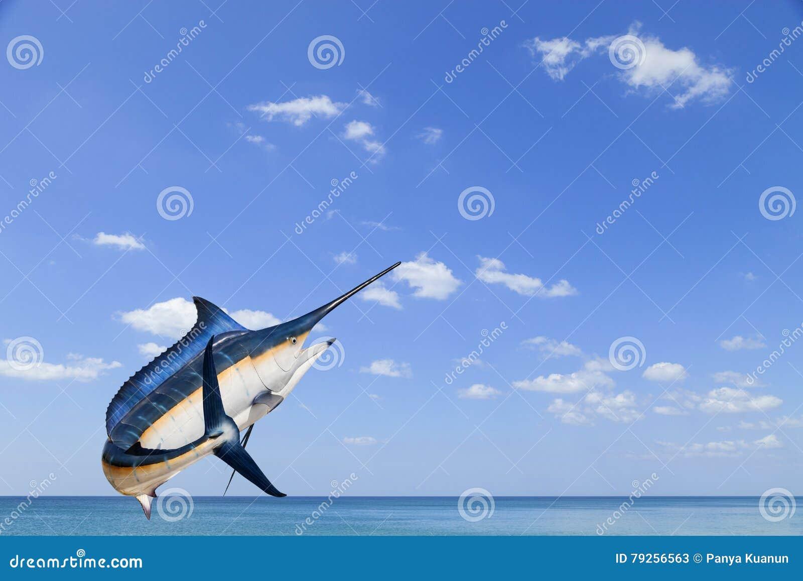 Marlin - svärdfisk-, Sailfishsaltvattensfisk & x28; Istiophorus& x29; isolat
