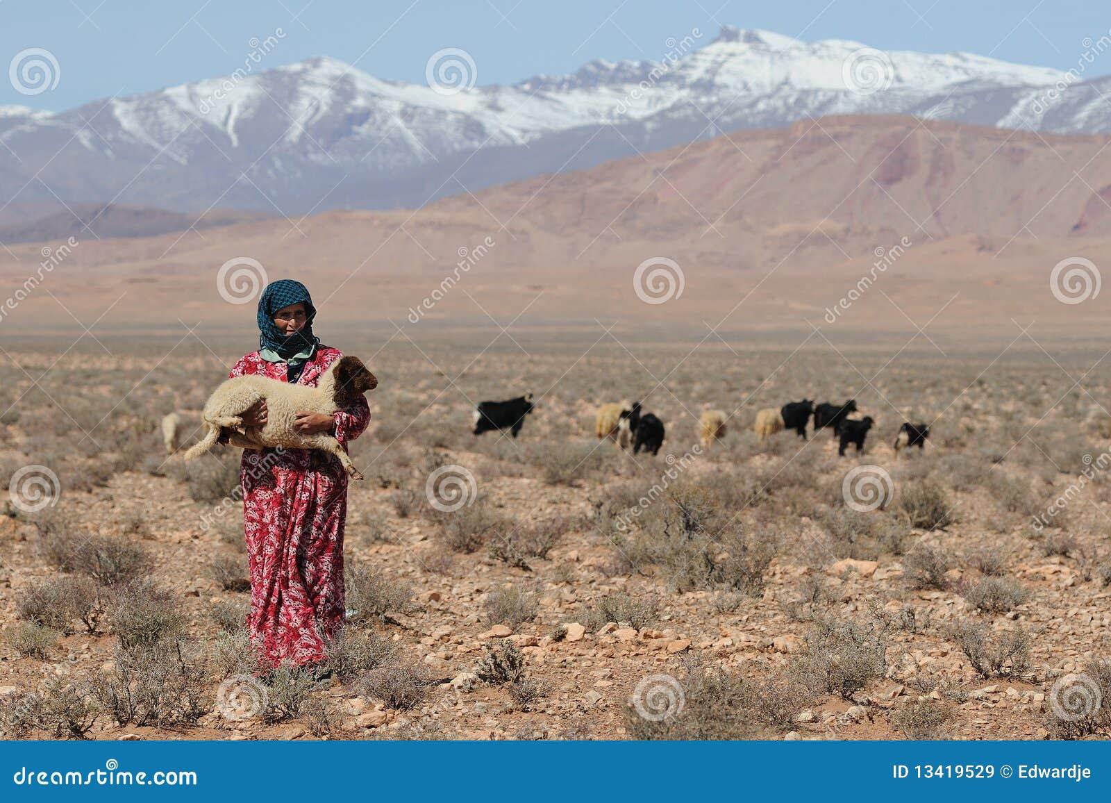 Marokkaanse Sheepherder