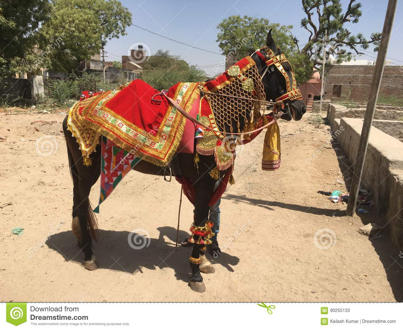Marriage Horse Stock Image Image Of Animal Traditional 90255133