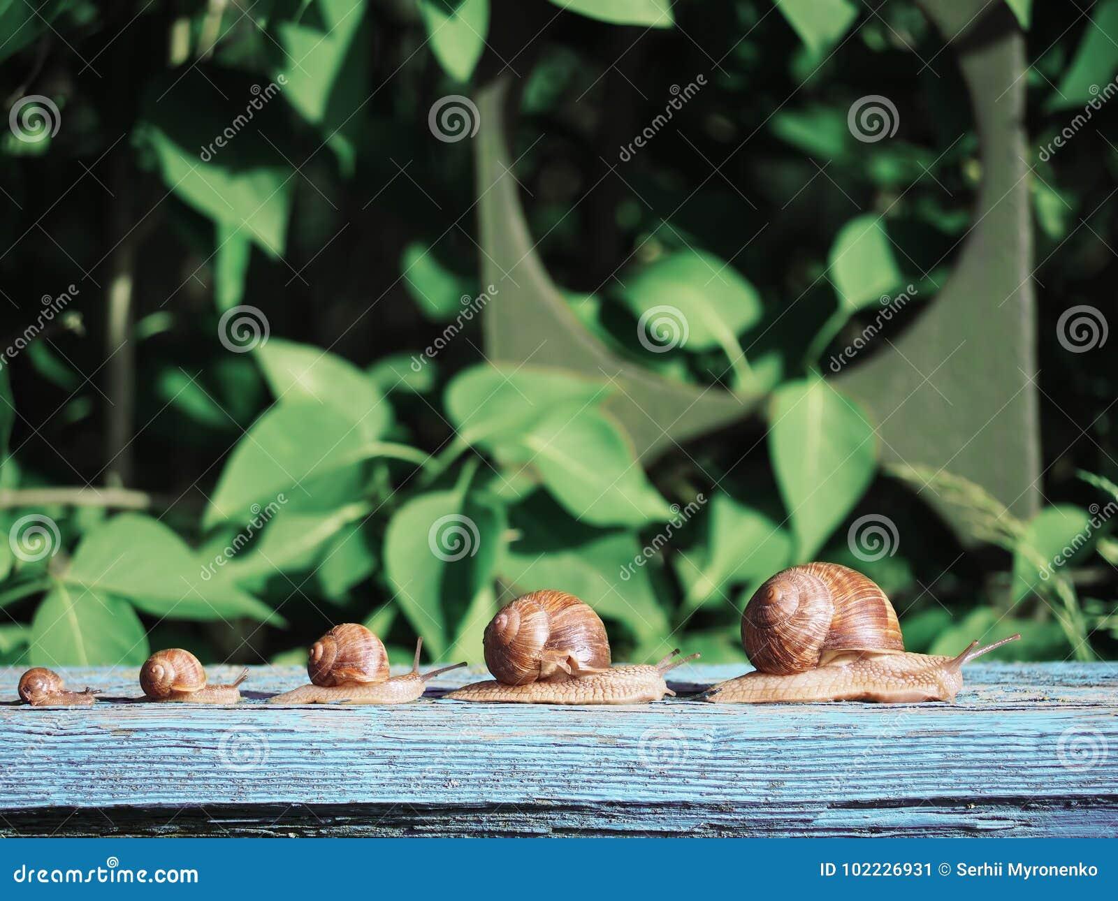 Marrom do caracol no backgroud verde que compete na madeira