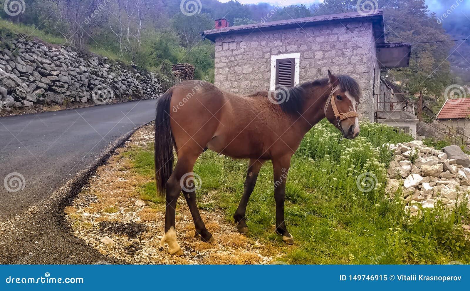 Marrom do cavalo na pena Contra o contexto das montanhas e das construções Exploração agrícola, vila, agregado familiar