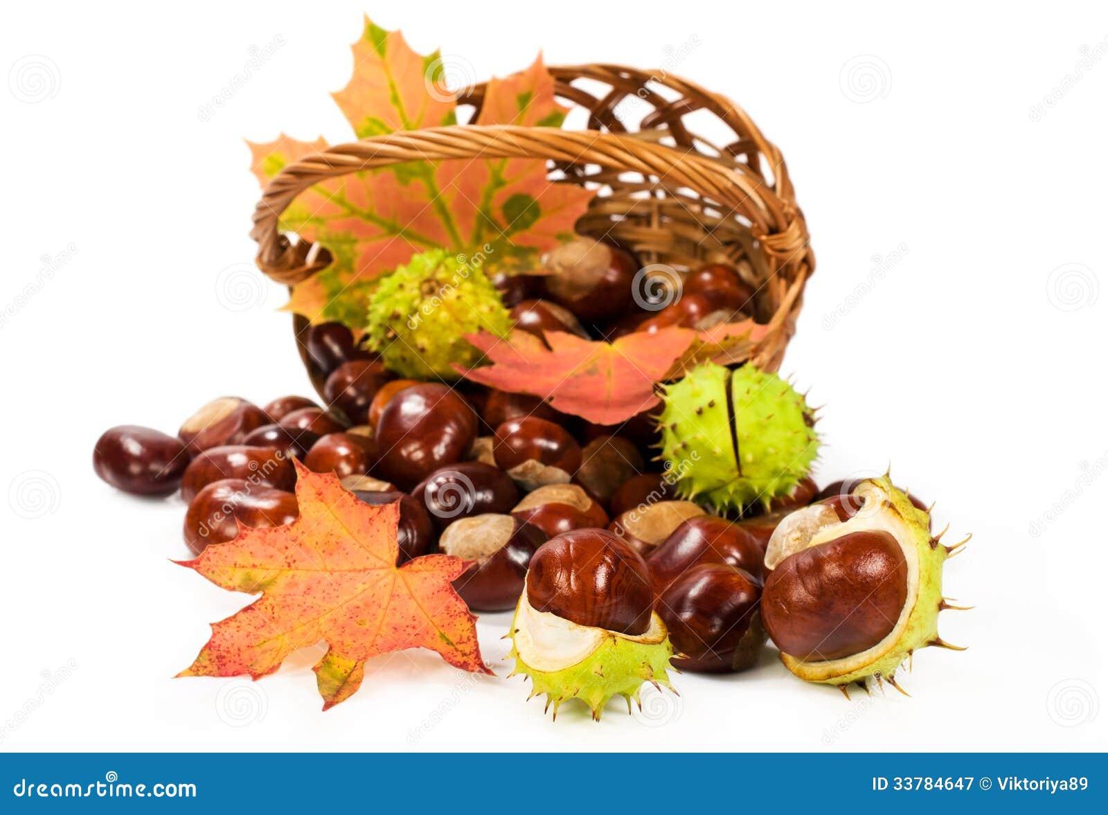 Marrons d 39 inde avec des feuilles dans un panier image stock image du objets d coration 33784647 - Activite avec des marrons ...