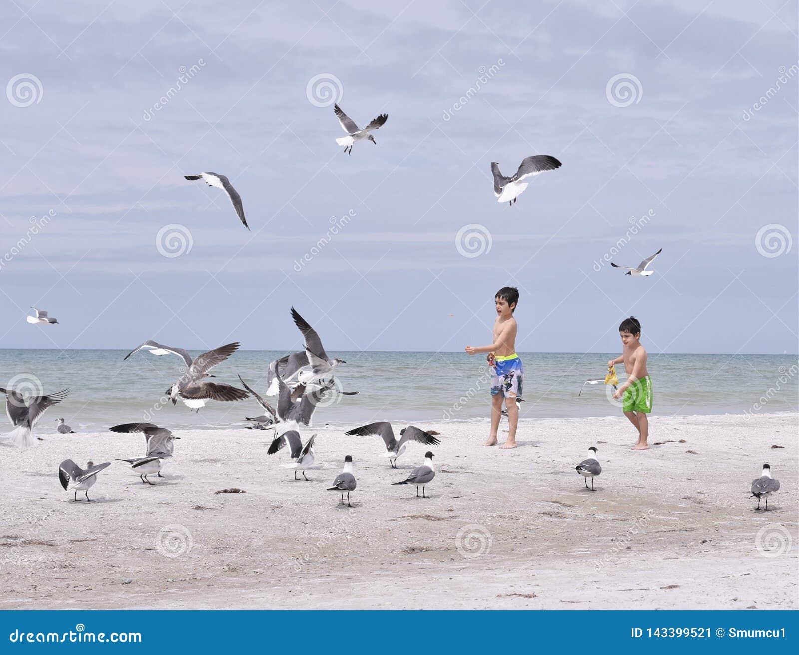Mars 2019, les roches indiennes échouent, la Floride - trois enfants sur les rivages immaculés d une plage de région de Tampa ali