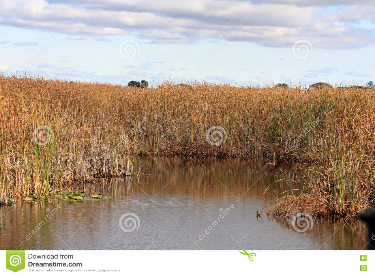 Marsh grasses and reeds reflected in a pool