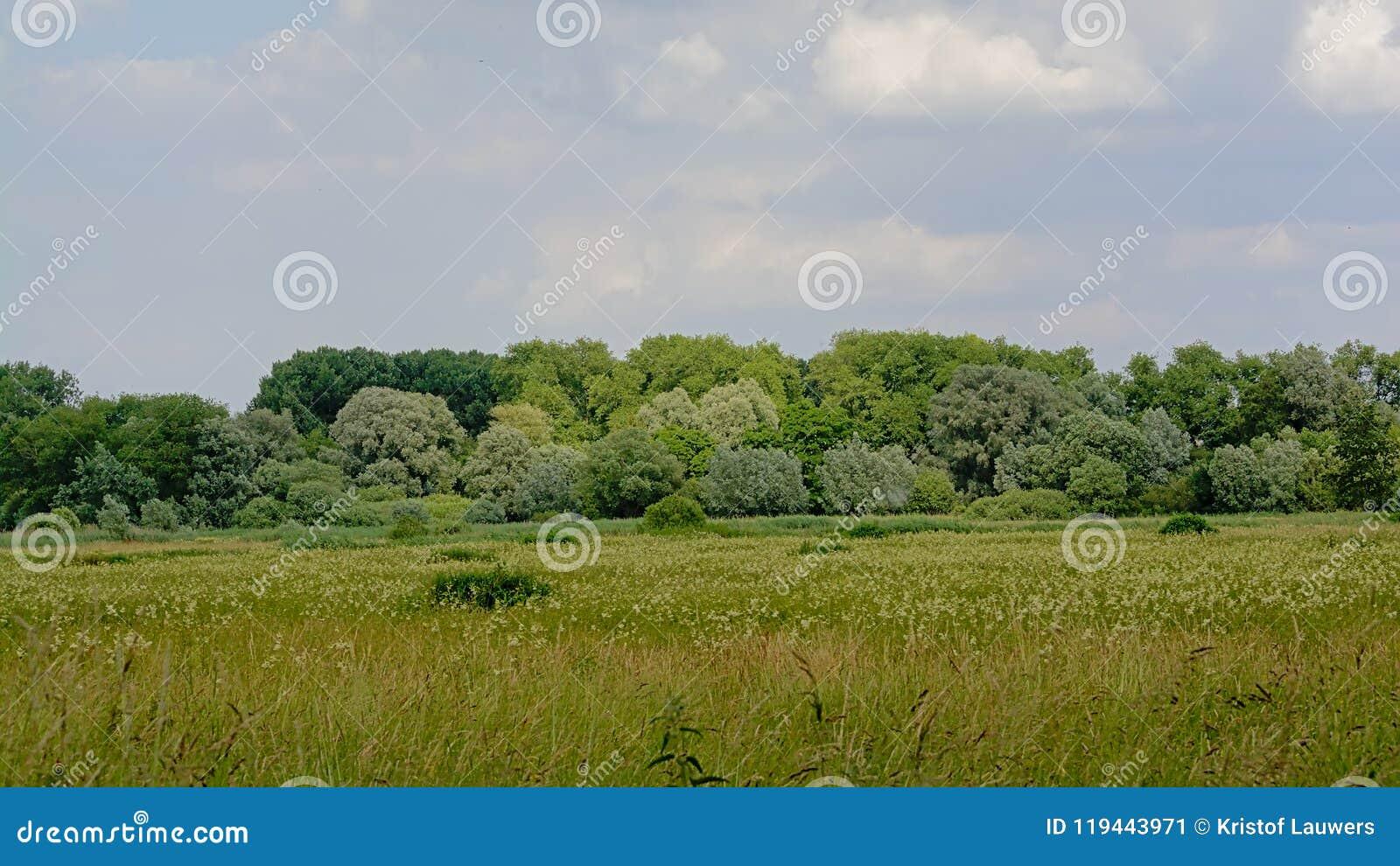 Wetlands in Kalkense Meersen nature reserve, Flanders, Belgium