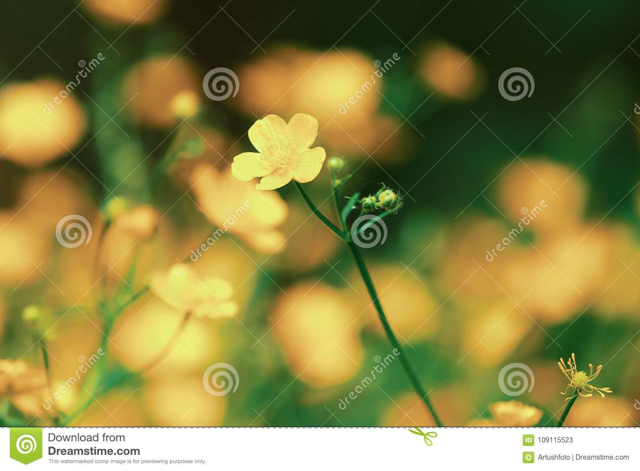 Marsh Marigold First Flowers In Spring Stock Image Image Of