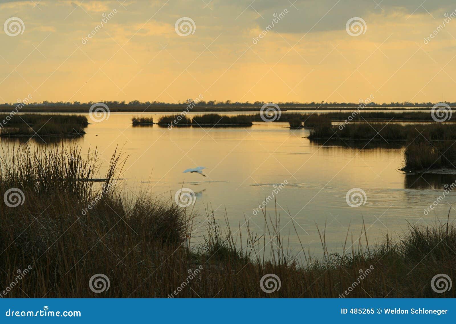 Marsh zmierzchu