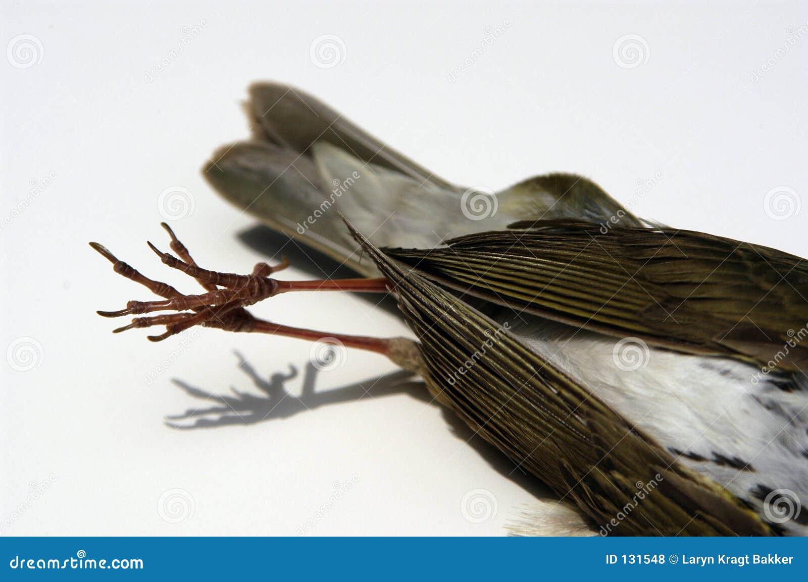 Martwy ptak szczegółów ogon