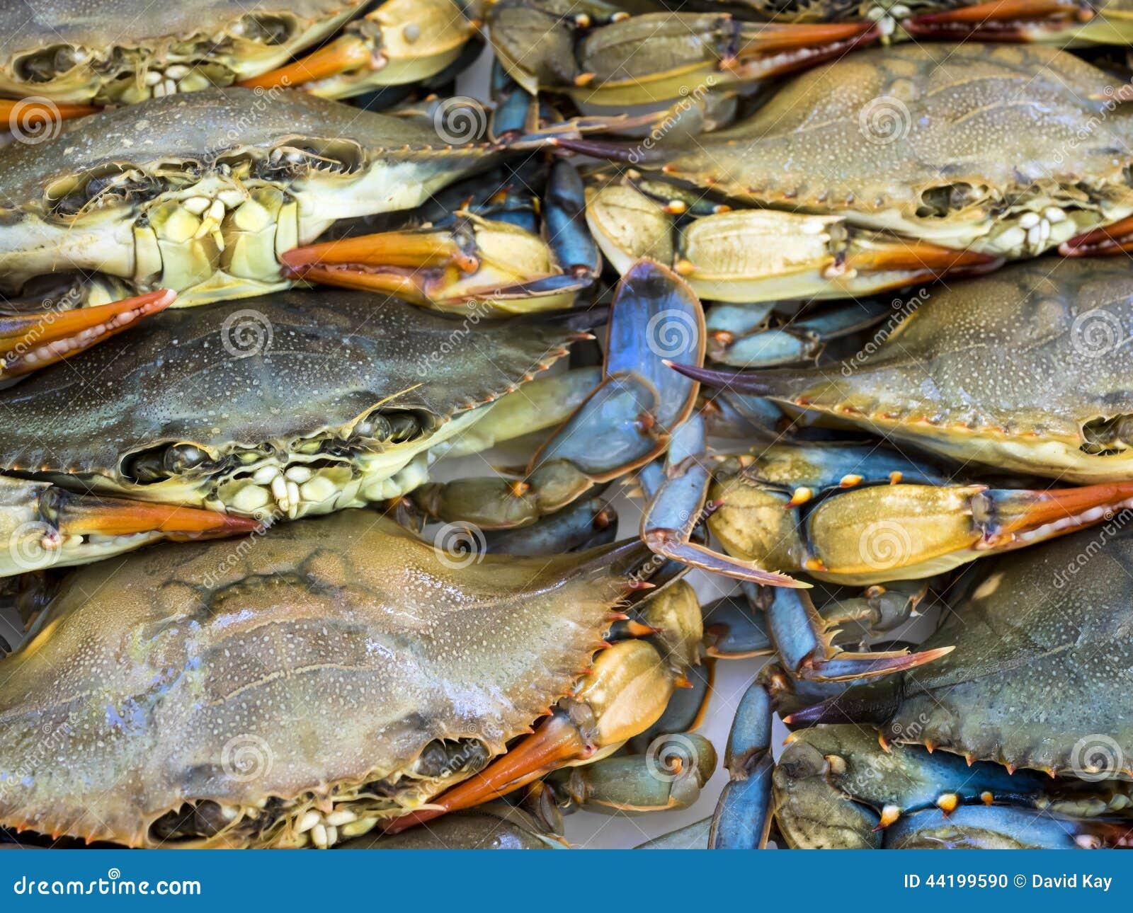 Freshwater fish maryland - Maryland Blue Crabs