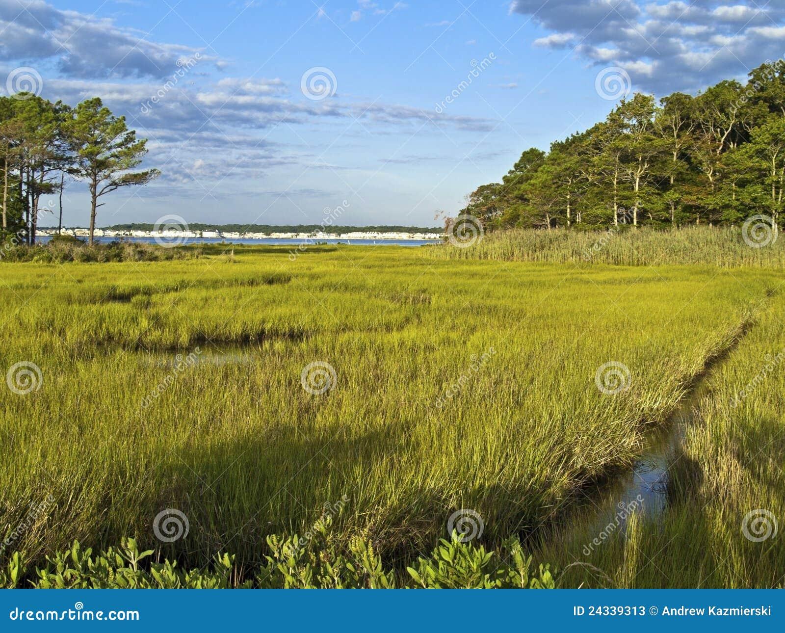 Maryland våtmark