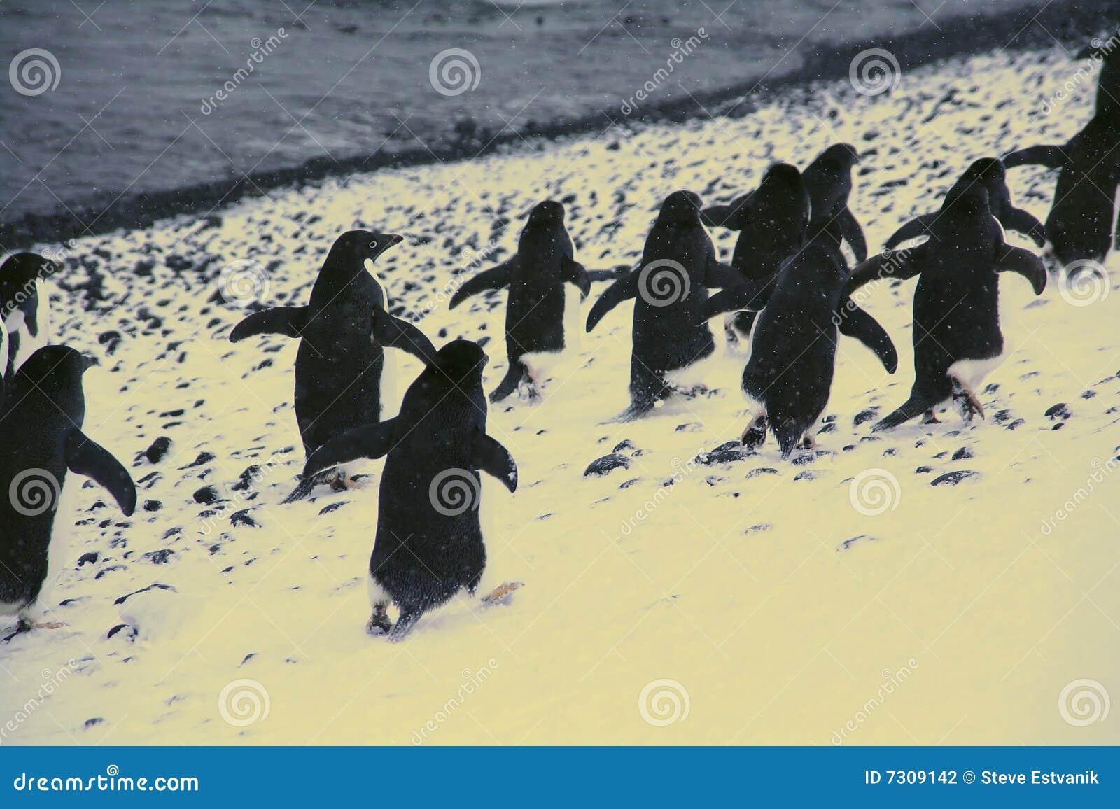Marzo dei pinguini