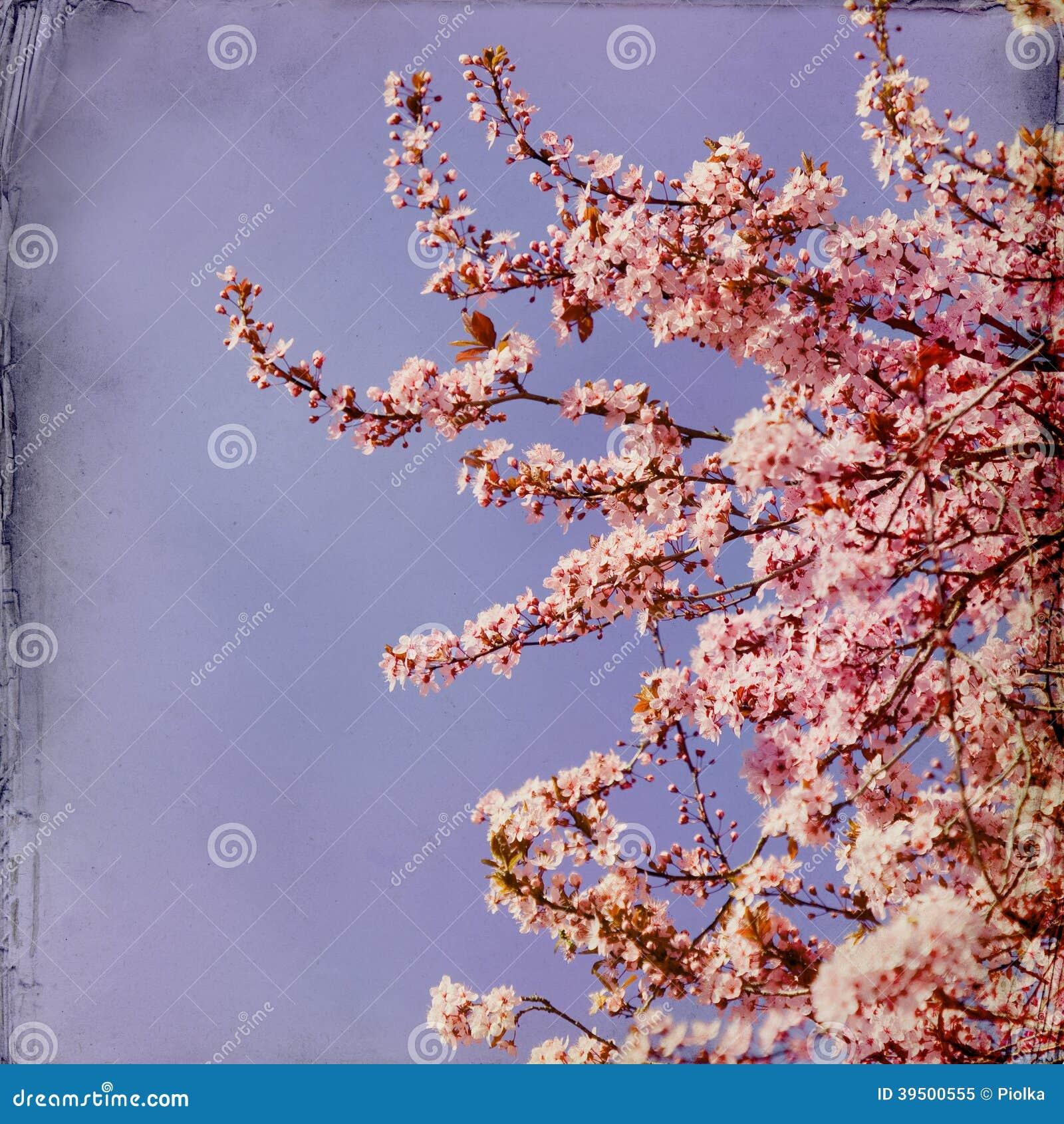 Marzycielski springflowers tło
