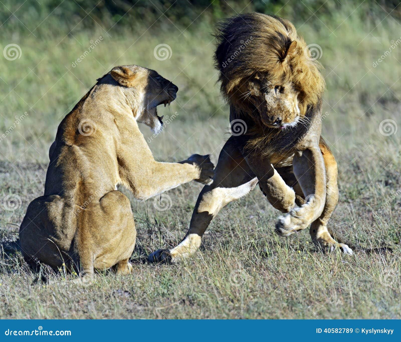 Masai Mara львов