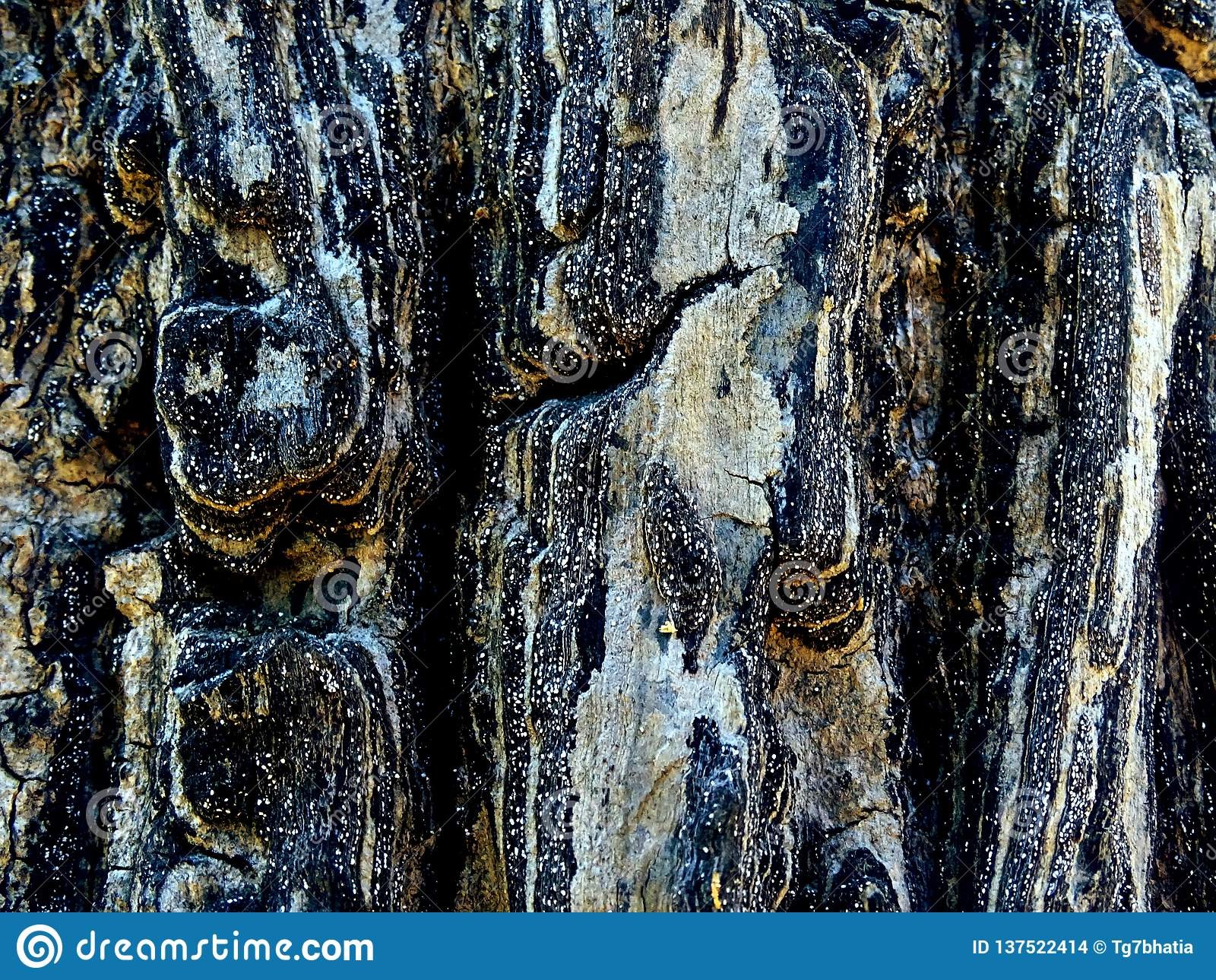 Masern Sie Oberfläche der Baumrinde