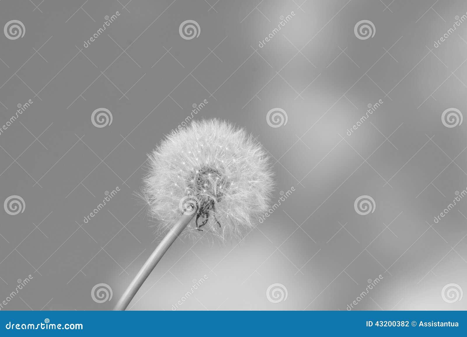 Download Maskros på våren arkivfoto. Bild av växt, naturligt, trädgård - 43200382