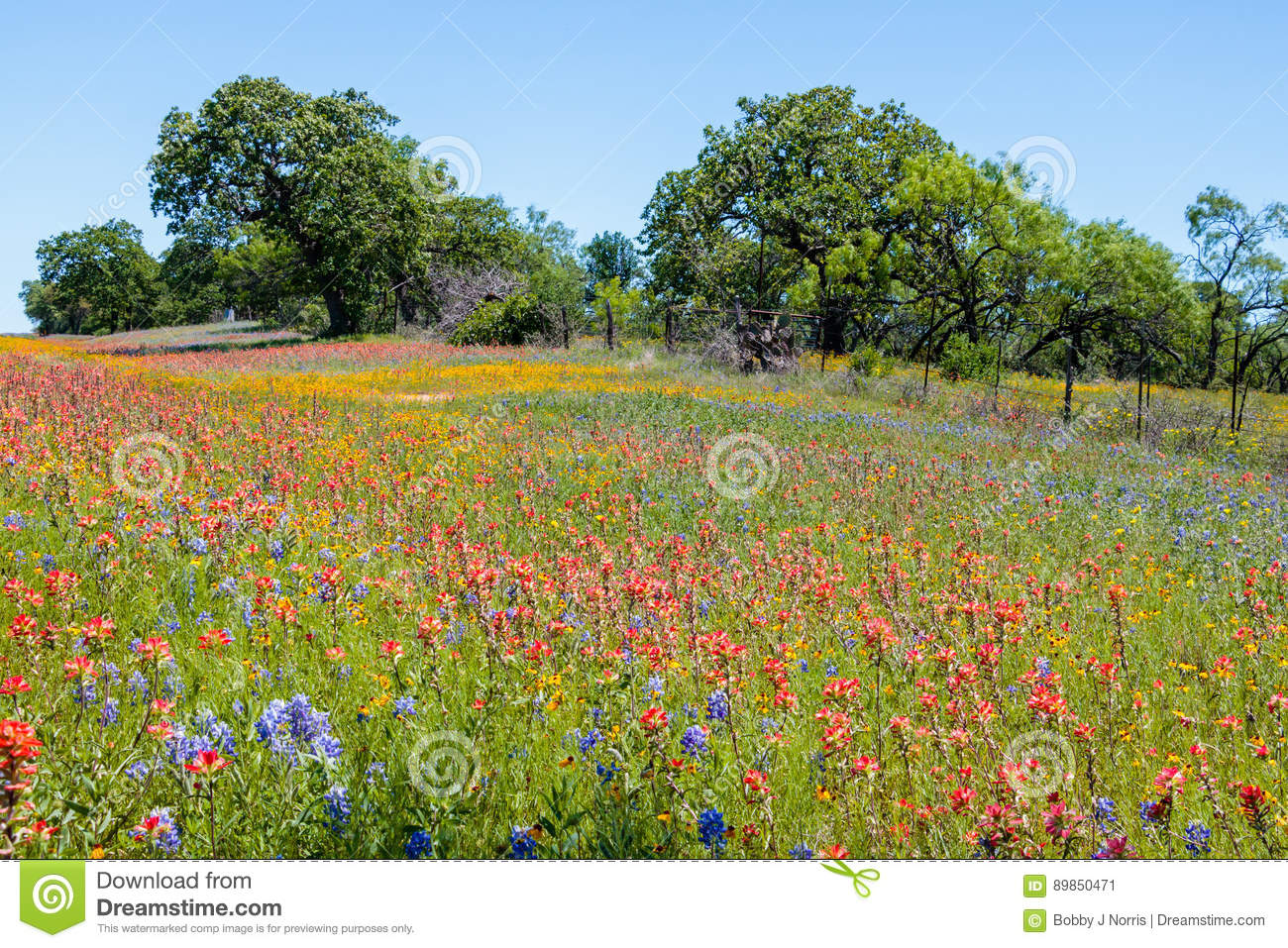 Mason Texas Wildflowers