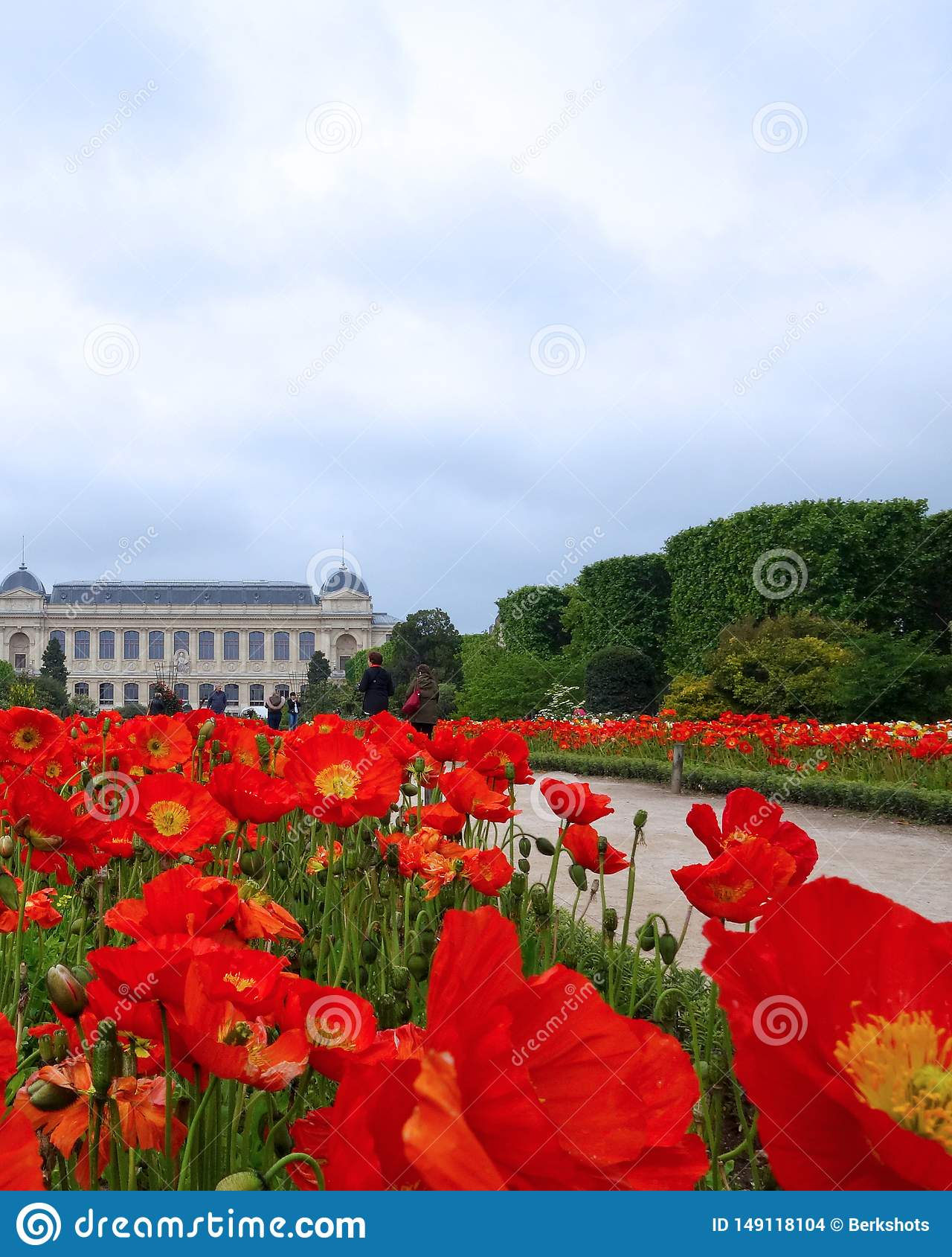 Mass Planting Of Red Poppies Paris Editorial Stock Image Image