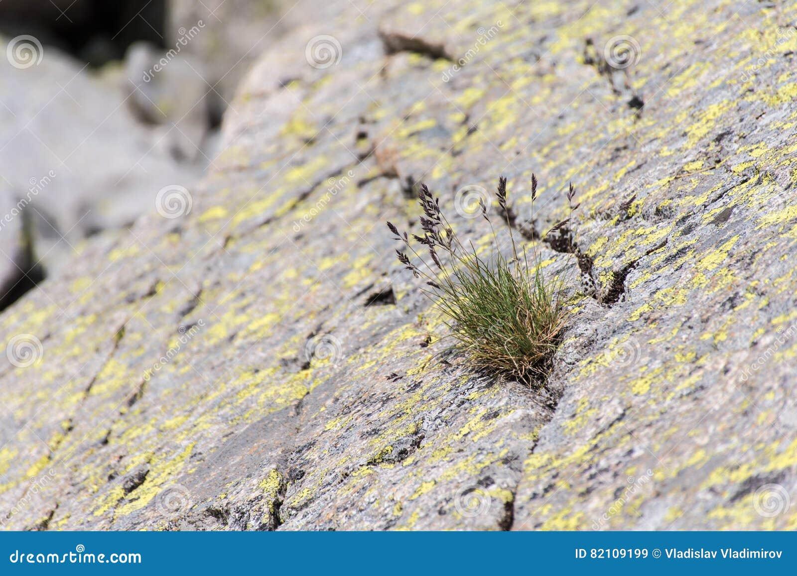 Massa van gras het groeien door een rotsbarst