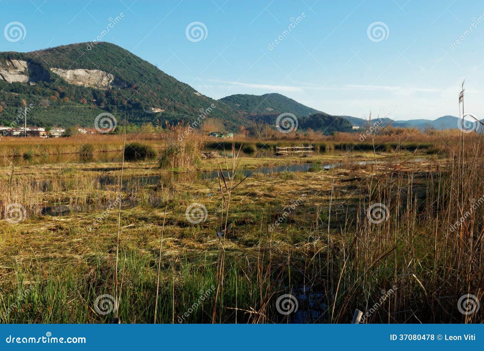 Download Massacciucoli oaza zdjęcie stock. Obraz złożonej z woda - 37080478