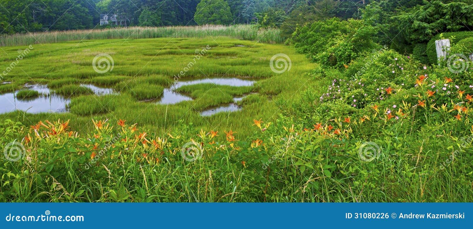 Massachusetts Wetland Panorama Royalty Free Stock Image