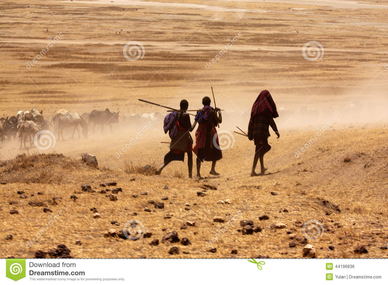Massai boys driving cows to drink water