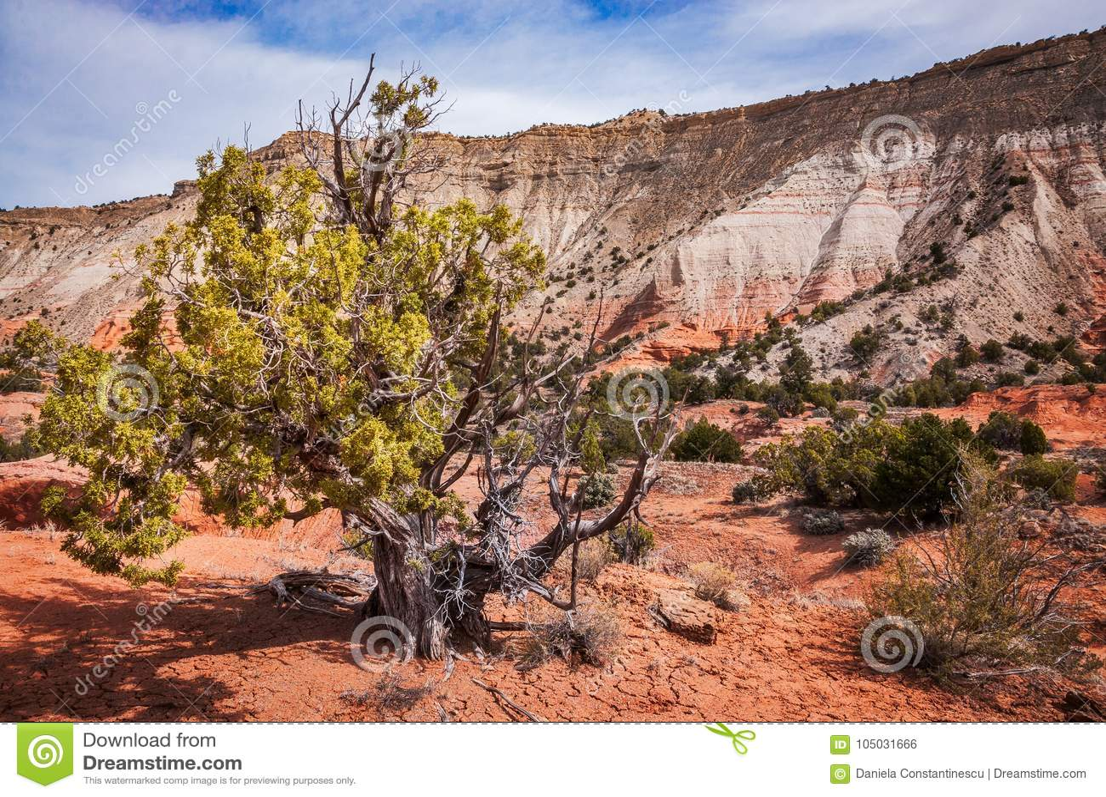 Juniper Tree at Kodachrome Basin State Park