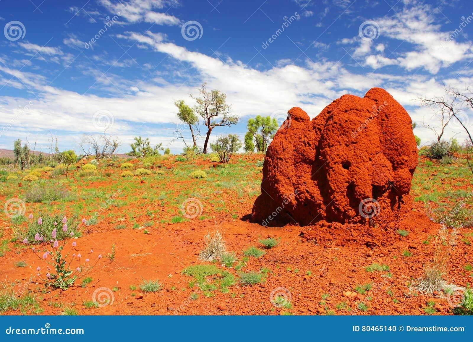 Massive Termite Mound In Australian Outback Western Australia Stock Photo Image Of Impressive Insect 80465140