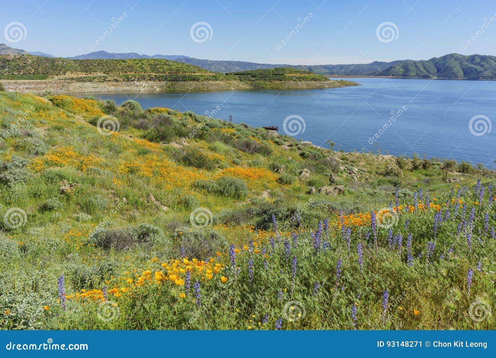 Massor av blomning för lös blomma på Diamond Valley Lake